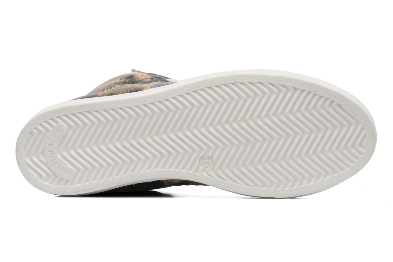 Sneaker American College Animal w mehrfarbig ansicht von oben