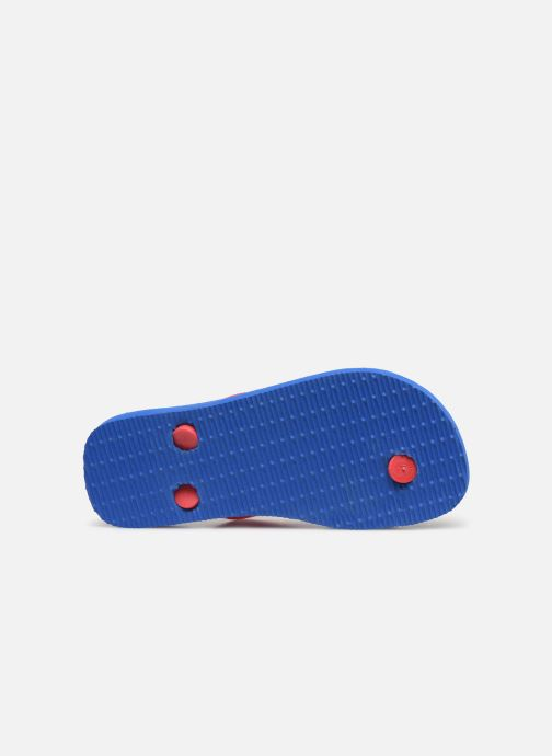 Flip flops Havaianas Kids Cars Blue view from above