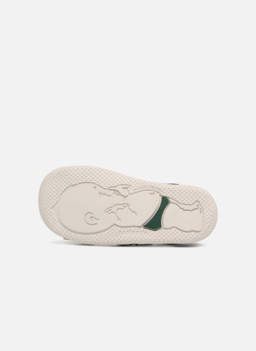 Sandales et nu-pieds Kickers BOPING Gris vue haut
