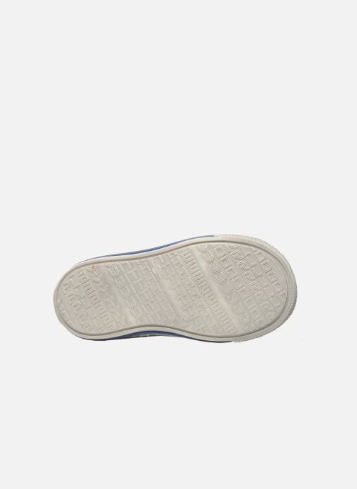 Velcro shoes Rondinella Pierrot Grey view from above