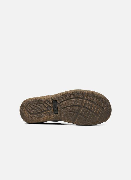 Zapatos con cordones Josef Seibel Neele 02 Marrón vista de arriba