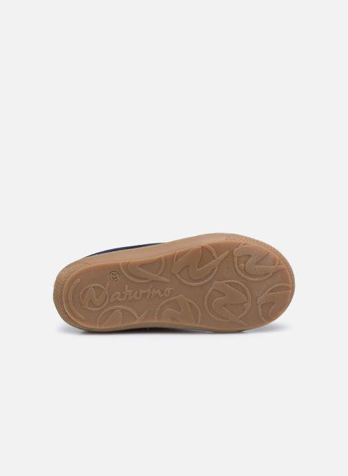 Zapatos con cordones Naturino Cocoon Azul vista de arriba