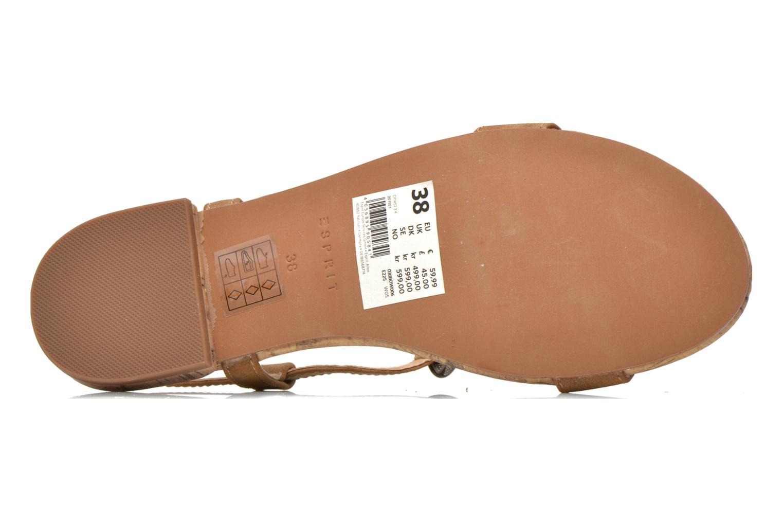 Sandales et nu-pieds Esprit Aely Ter Sandal Marron vue haut