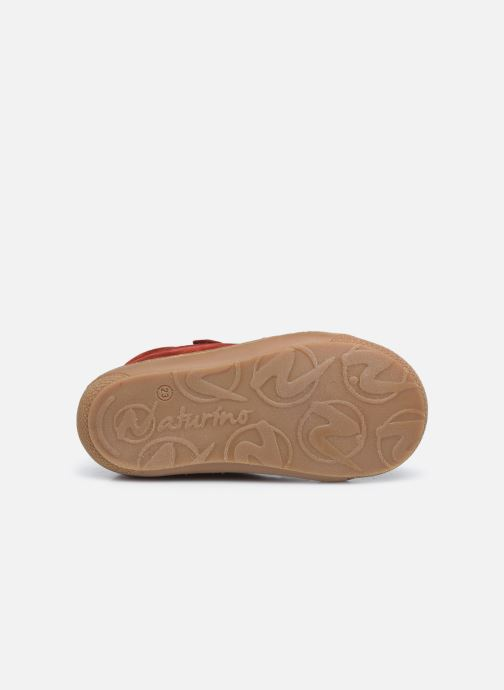 Sneakers Naturino Cocoon VL Rood boven