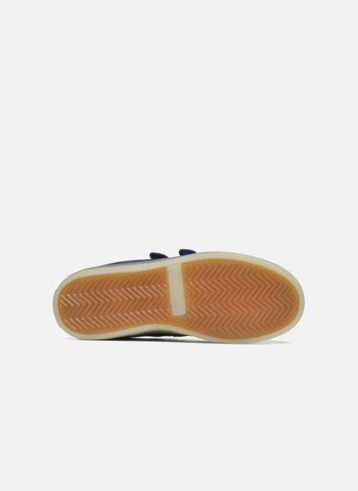 Sneakers Beppi Beps Light Azzurro immagine dall'alto