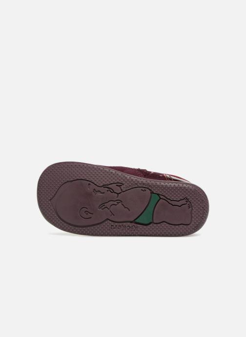 Bottines et boots Kickers Biliana Bordeaux vue haut