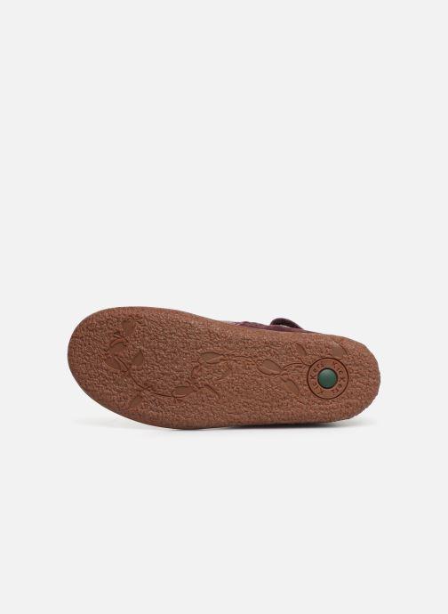 Boots en enkellaarsjes Kickers Vermillon Paars boven