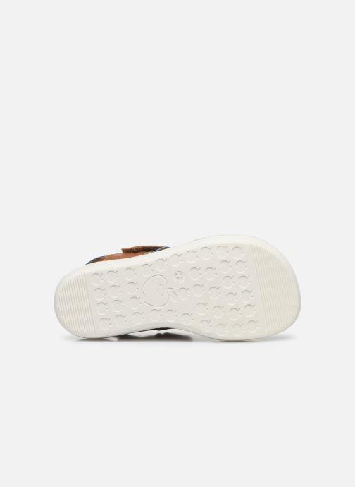 Sandales et nu-pieds Shoo Pom Goa Boy Scratch Marron vue haut