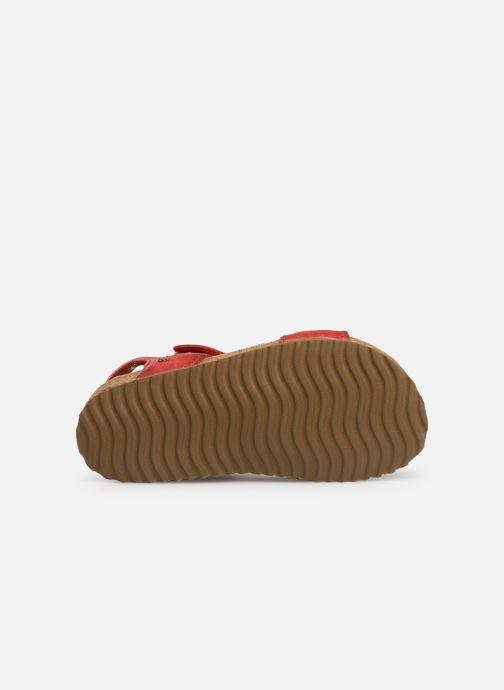 Sandales et nu-pieds Shoesme Sabin Rouge vue haut