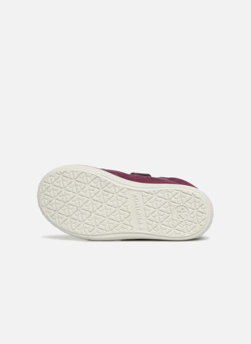 Trainers PEPINO Sia-tex Purple view from above