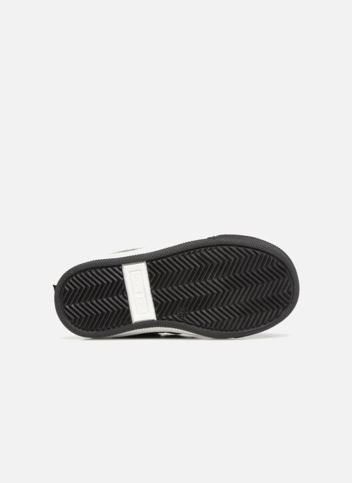Stiefeletten & Boots Shoo Pom Dude Board schwarz ansicht von oben