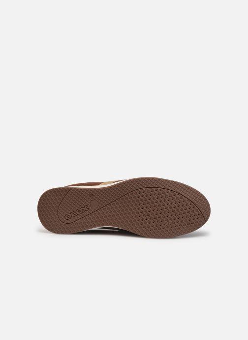 Sneaker Geox U AVERY B braun ansicht von oben