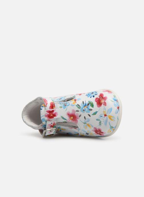 Ballerina's Bopy Petunia Multicolor links