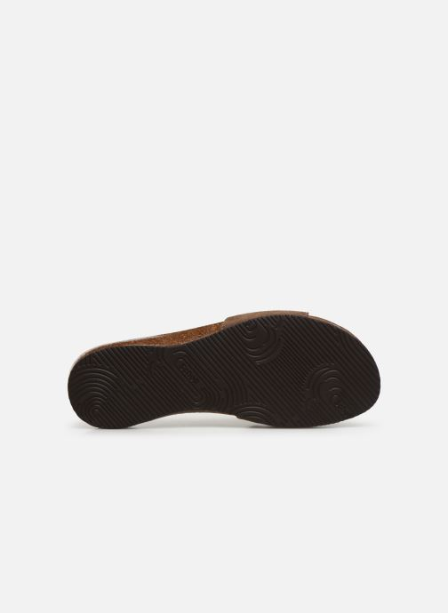Mules & clogs Scholl Bahama 2.0 C Brown view from above