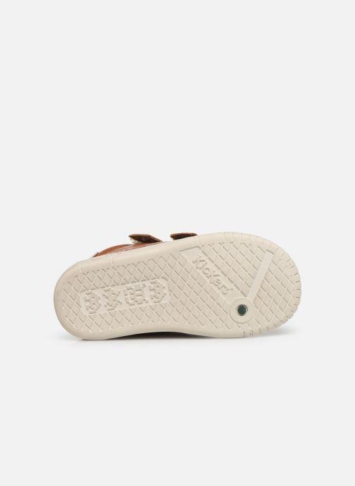Sneakers Kickers Wip Bruin boven