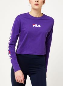 Tillandsia Purple