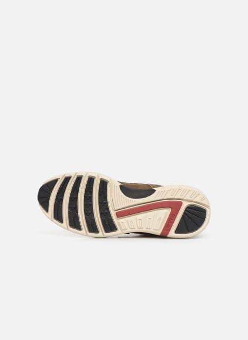 Sneakers Levi's ALPINE Bruin boven