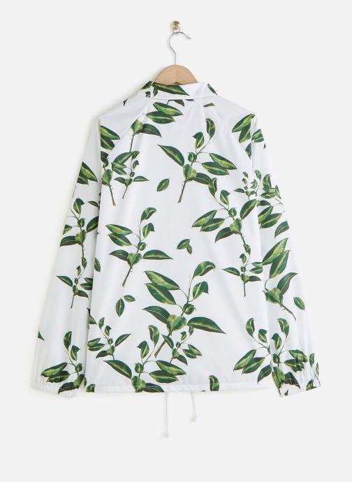 Vans Torrey (Blanc) - Vêtements chez Sarenza (442184) yfsIk