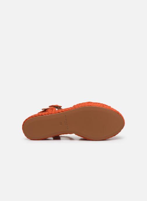 Sandali e scarpe aperte Clergerie ALDA Arancione immagine dall'alto