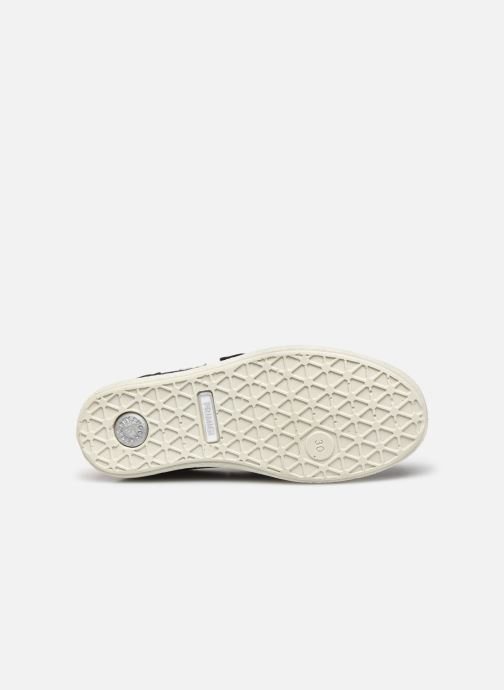 Sneakers Primigi PHO 53745 Blå se foroven