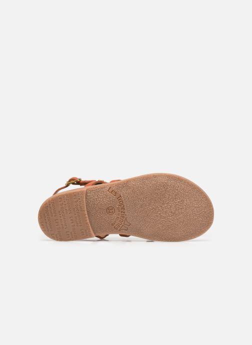 Sandali e scarpe aperte Les Tropéziennes par M Belarbi Hakea Arancione immagine dall'alto