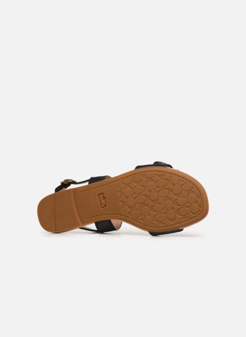 Sandales et nu-pieds Coach Jen Buckle Sandal Noir vue haut