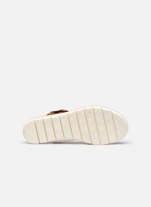 Sandali e scarpe aperte Marco Tozzi MERONE Marrone immagine dall'alto