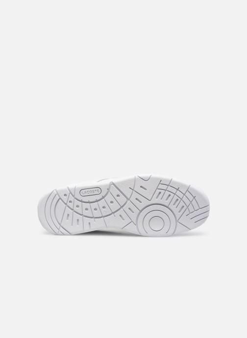 Sneaker Lacoste Thrill 0120 1 weiß ansicht von oben