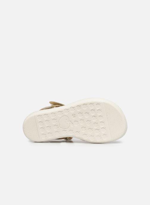 Sandales et nu-pieds Shoo Pom Goa Toucan Multicolore vue haut