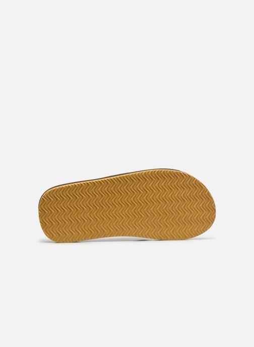 Zehensandalen Cool Shoe CLOUD DLX braun ansicht von oben